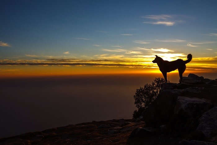 A dog stands on a rock as the sun sets at Triund