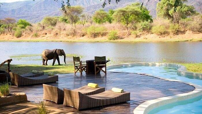 Pool in the background of elephants in Zambia