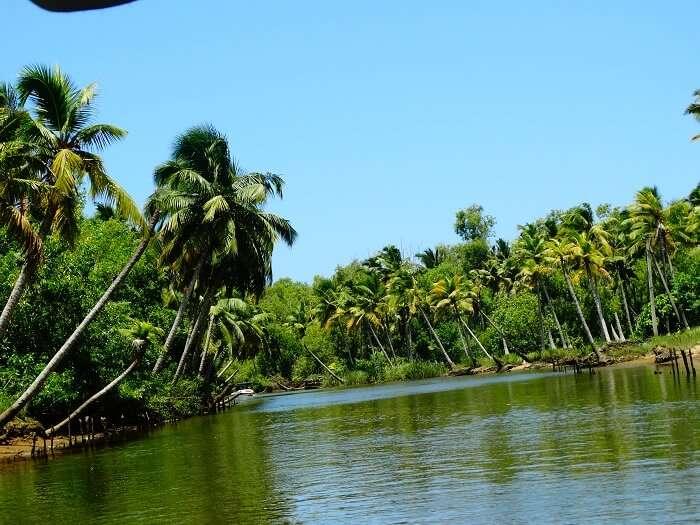 Beautiful safari in Poovar Kerala