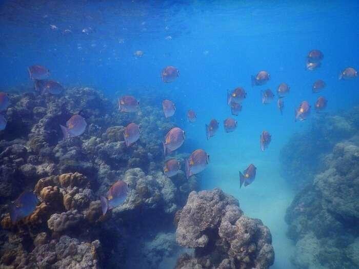 Marine life of Andaman