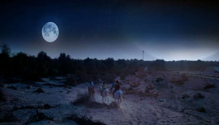 Full moon horse ride in Dubai