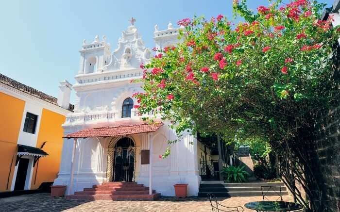 White catholic Church and pink branches in Goa