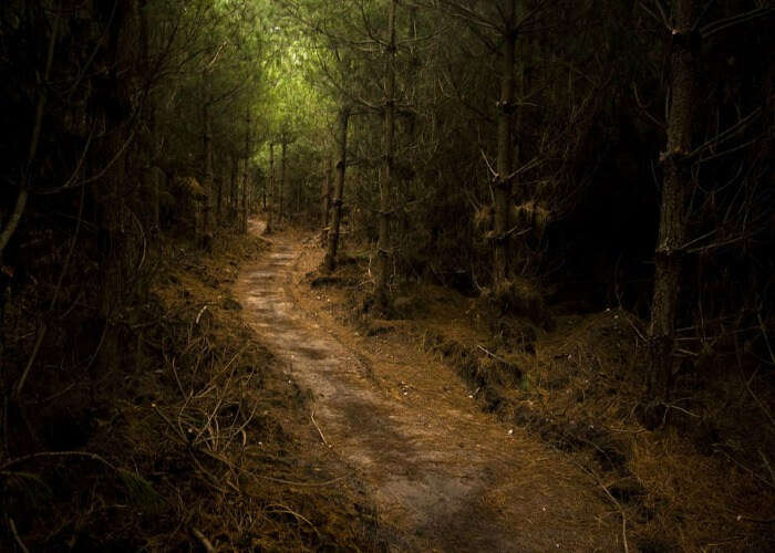 Unknown path in the forest