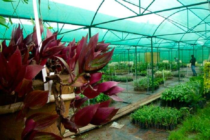 A beautiful view of the greenhouse at the Sippighat Agricultural Farm in Port Blair
