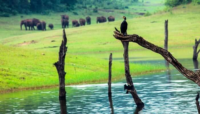 Beautiful landscape of Thekkady in India with elephants and birds in it