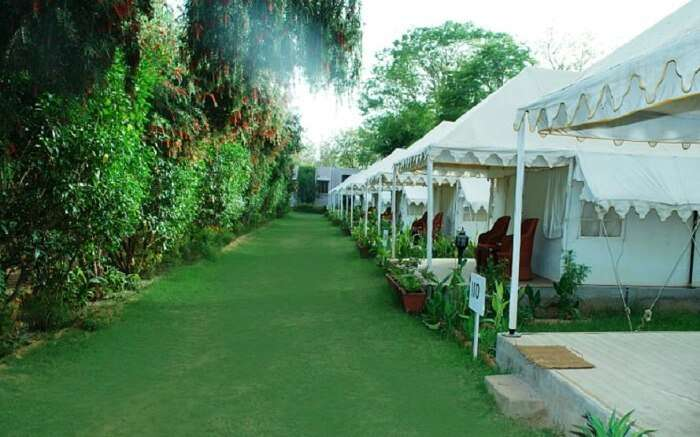 Luxury tents at Tiger Machan in Sawai Madhopur - Ranthambore