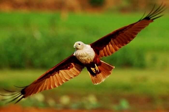 Enjoy spotting migratory birds at Mangalavanam Bird Sanctuary