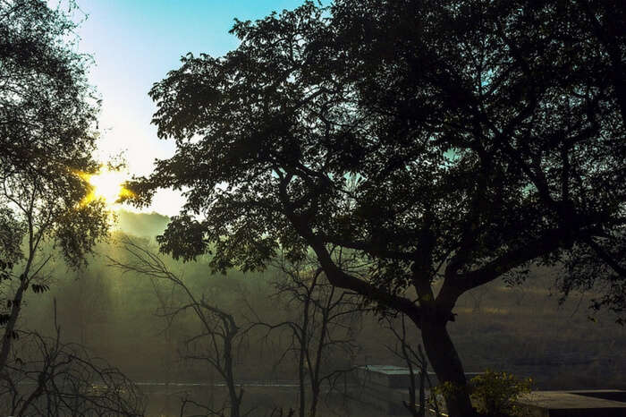 Glorious sunrise in Ranthambore National Park