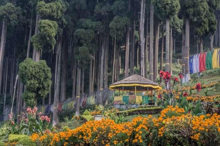 Lamahatta- Kalimpong