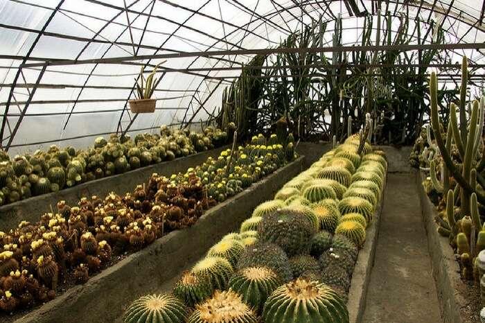 Pine View Nursery- Kalimpong