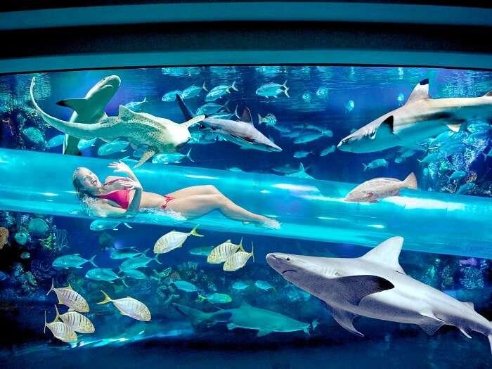 Pool slide at Golden Nugget in Las Vegas