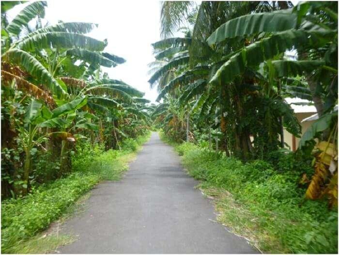 Beautiful Neil Island in Andaman
