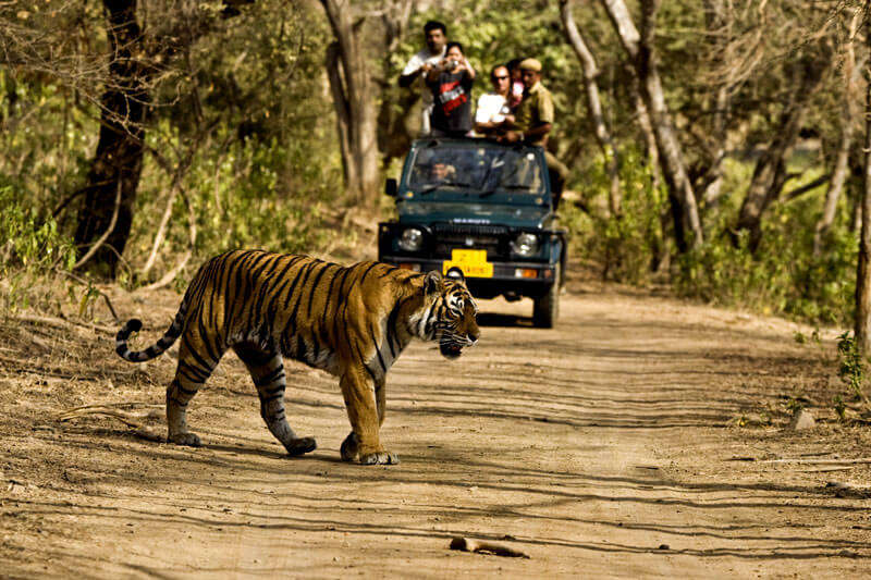 Bring on the adventure at Jim Corbett