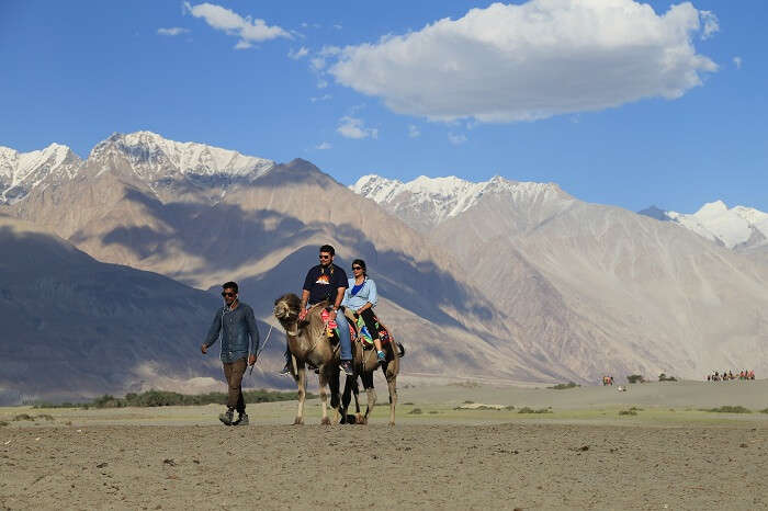 A camel takes a camel ride in Leh Ladakh on their honeymoon