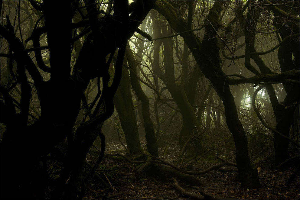 Scary woods Lockerbie