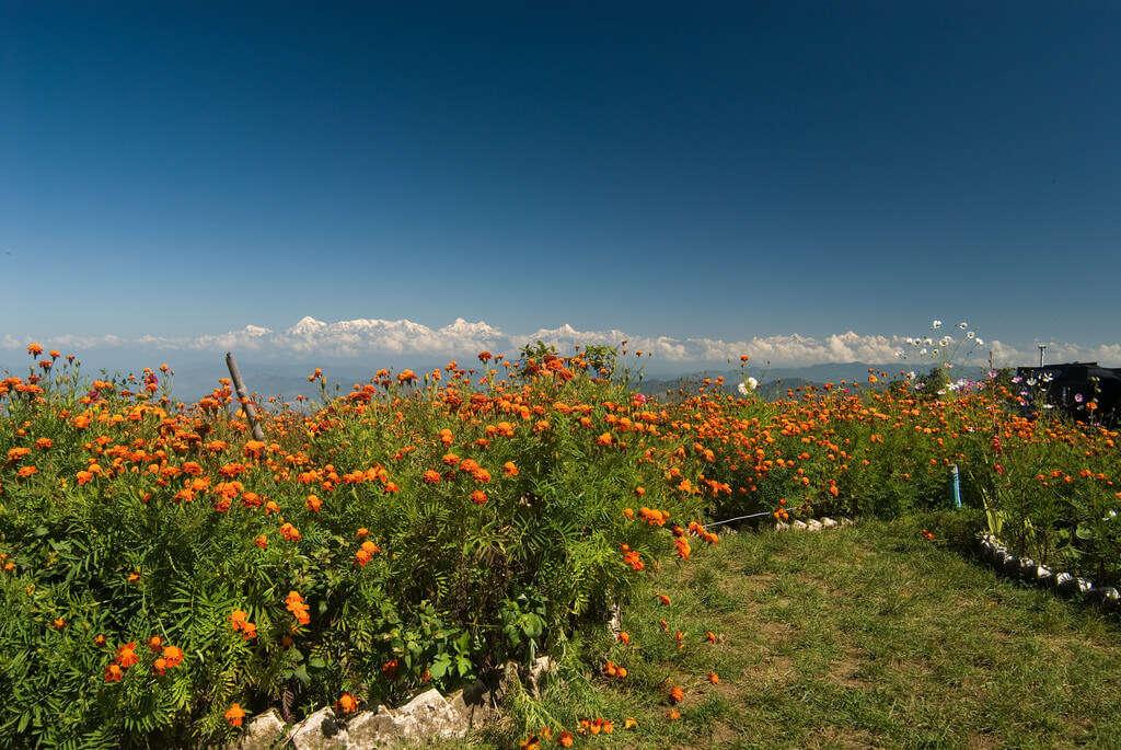 beautiful views of snow mountains in Mukteshwar