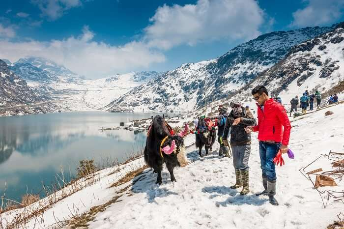 Tourists ready to take a yak ride at Tsomgo Lake in Sikkim