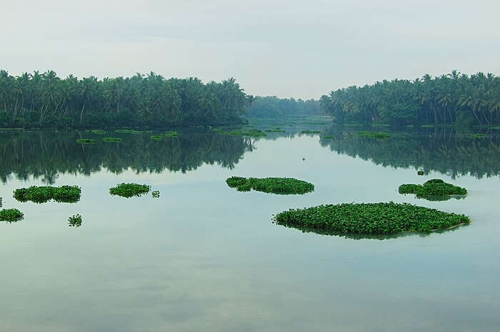 A shot of the Akkulam Lake and the lush greenery surrounding it