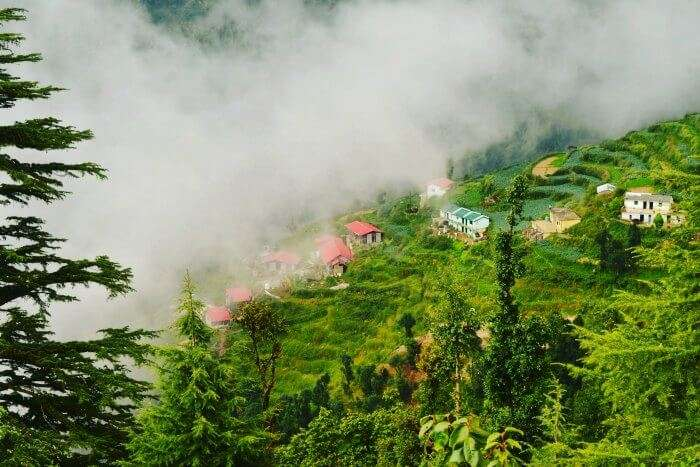 A view of the terrace farms in Dhanaulti