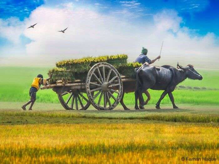 Visit the charming fields ad rural life of Bangladesh