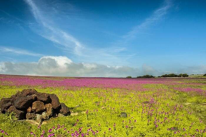 A beautiful shot of the Kaas Plateau in Maharashtra that is covered with flowers