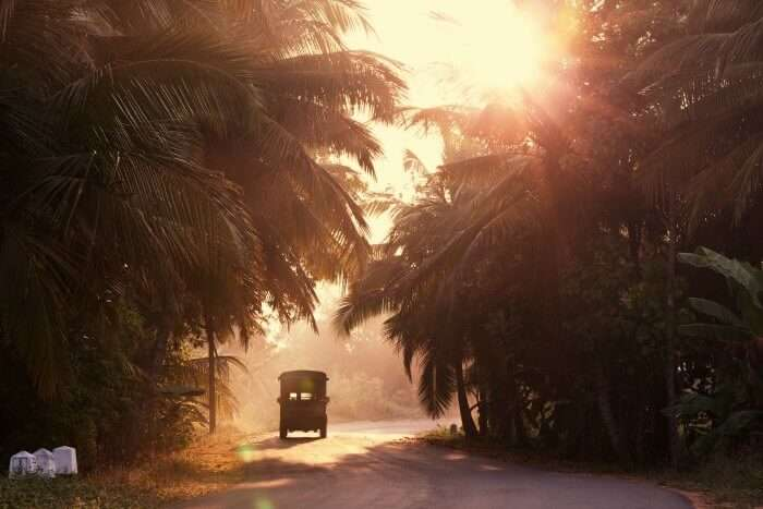 A jeep driving amidst the trees in Sri Lanka