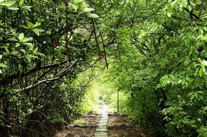 A pathway through the dense trees at the Salim Ali Bird Sanctuary