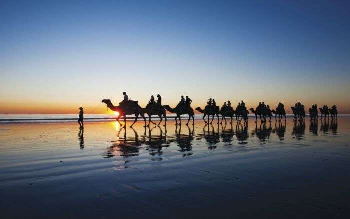 Camels in Cable Beach