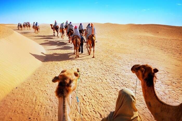Tourists on a camel safari in the desert at Jaisalmer