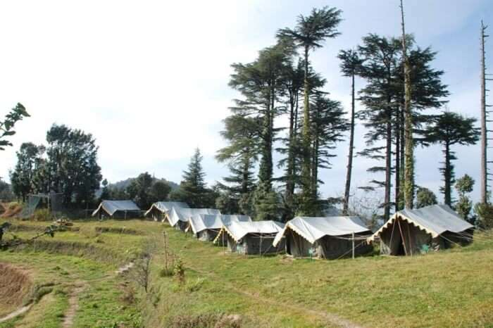Tents lined up at the edge of the forest at the Kanatal Adventure Camp near Dhanaulti