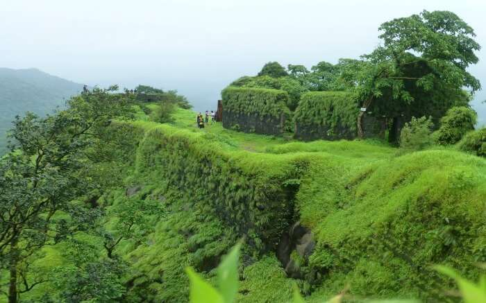 Lush greenery in Karnala - a popular destination for camping near Mumbai