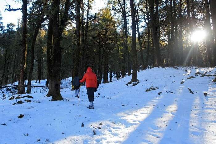 Trekkers walk on the snow during the Nag Tibba winter trek