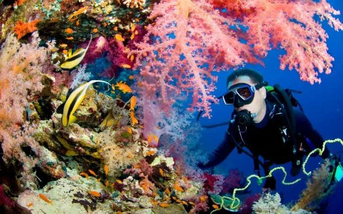 Scuba diver with colorful corals and fishes
