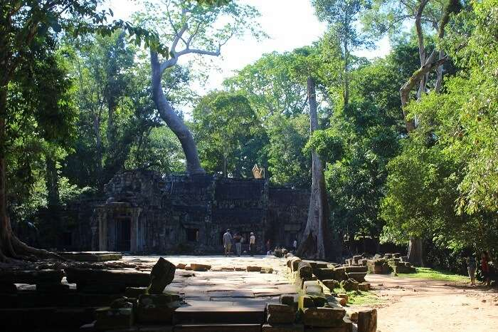 Sightseeing in Ta Phrom Temple