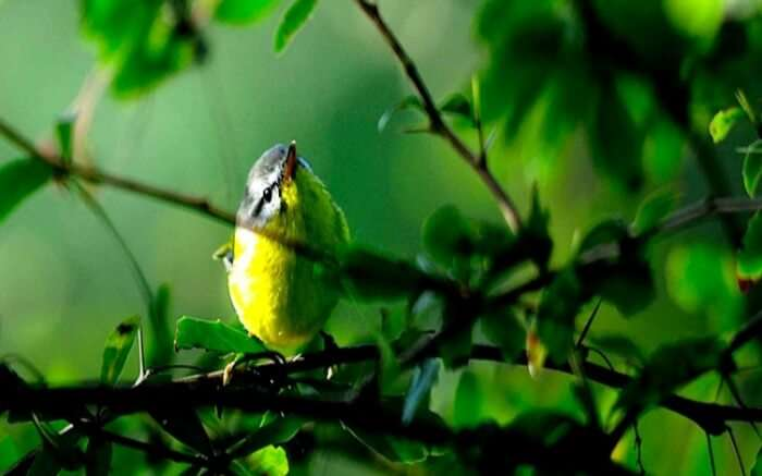 A bird spotted in Chail Wildlife Sanctuary - one of the best places to see in Chail