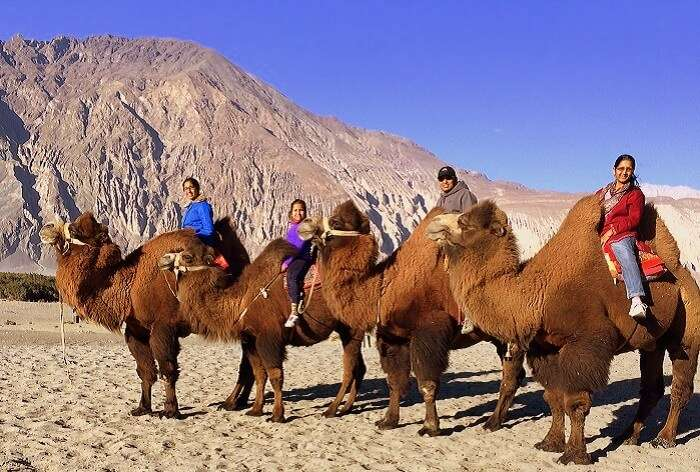Manish and his family ride the Double Hump Camel in Hunder