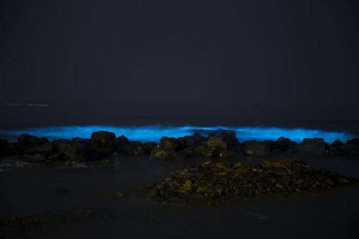bioluminescence phenomenon witnesses in juhu beach in mumbai
