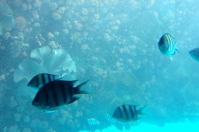 Spotting some rare fishes at Lembongan Island
