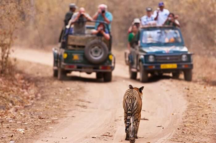 A scene from the Jim Corbett safari