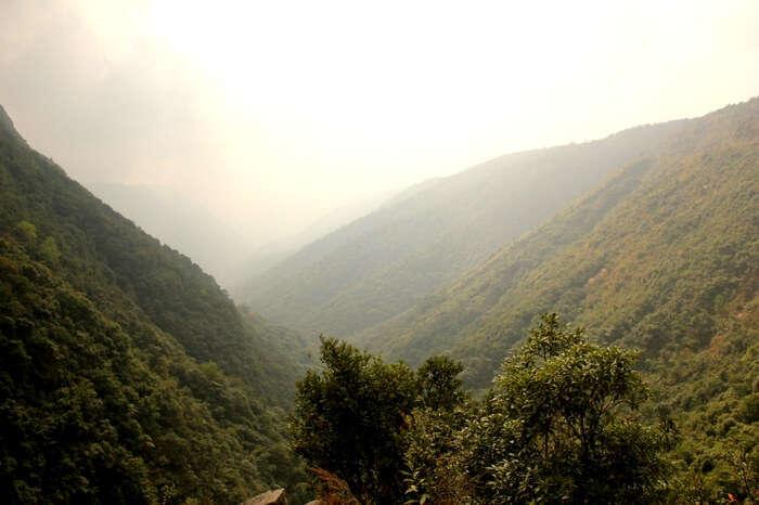 Dense forest in East Khasi Hills region