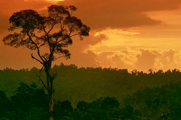 Nature at the time of sunset in a still from the documentary Sacred Planet