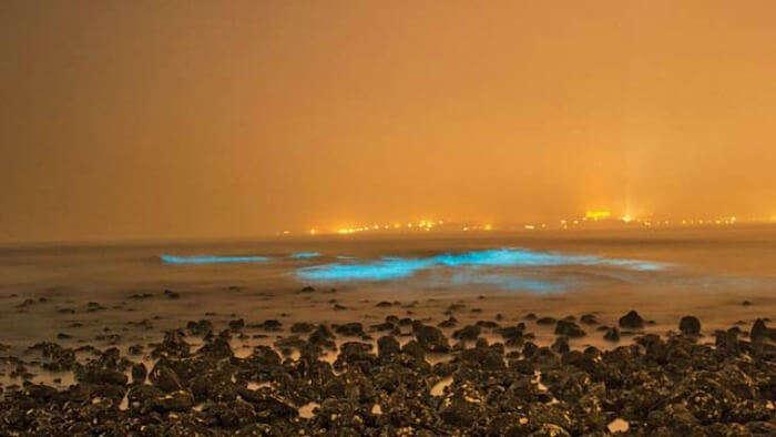 bioluminescence on juhu beach in mumbai