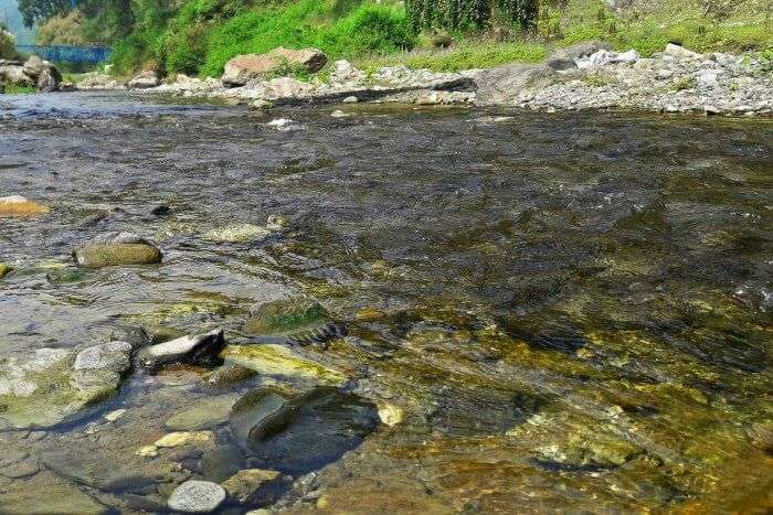 the Khoh river gurgling and burbling over pebbles and rocks