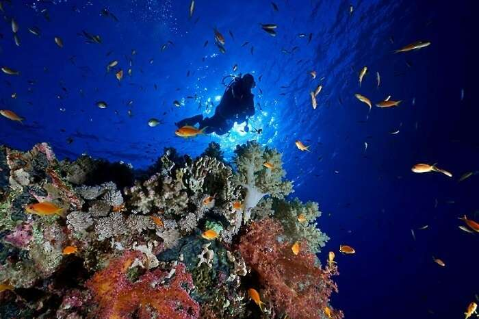 Scuba Diving in Andaman Island