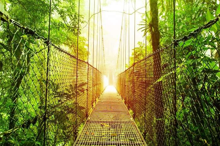 The Arenal Hanging Bridge in the ecological reserve in Costa Rica