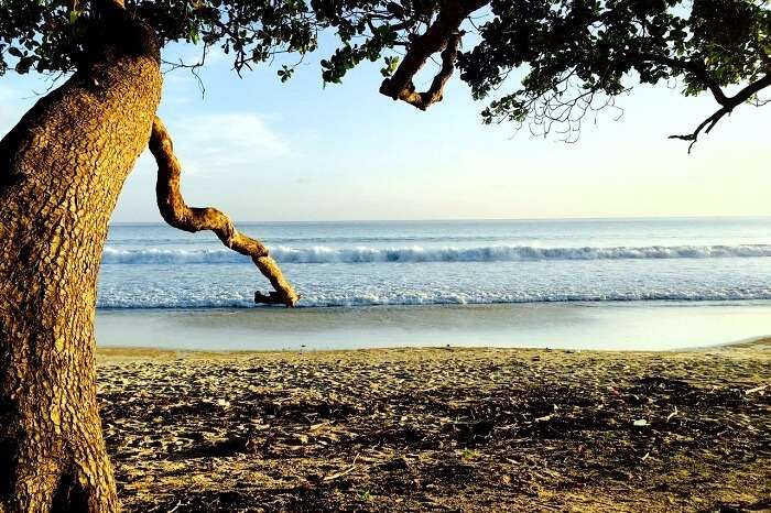 Scenic Mangrove trees