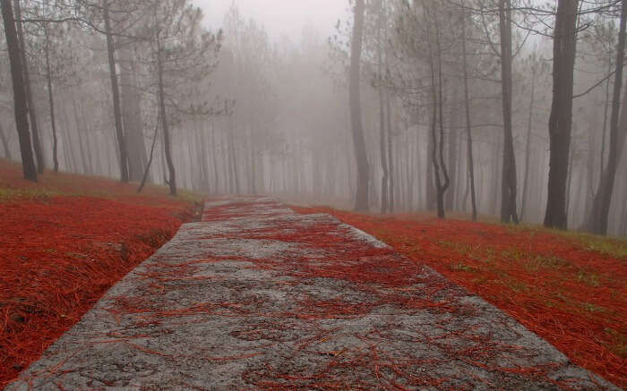 Cemented trail covered in mist