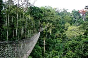The suspended Canopy Walk in Ghana
