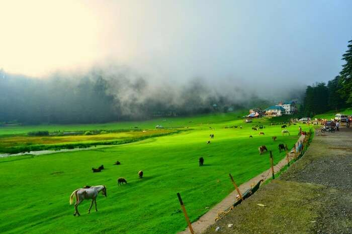 A view of green pasture in Khajjiar in Himachal Pradesh