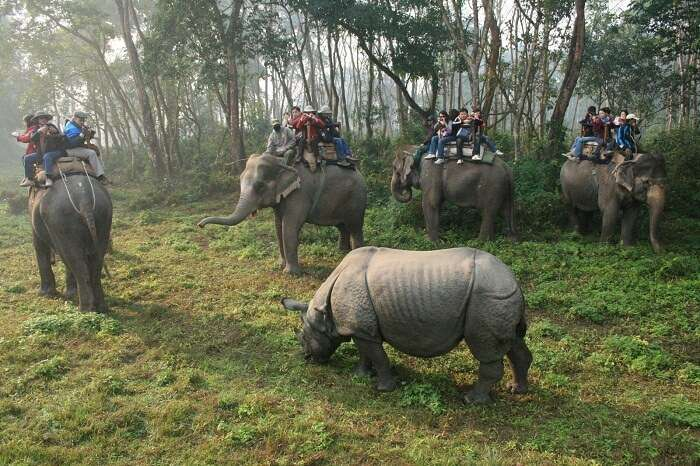 Tourists take an elephant safari in the Chitwan National Park